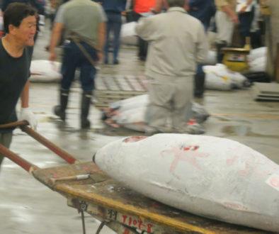 Tuna auction Tokyo