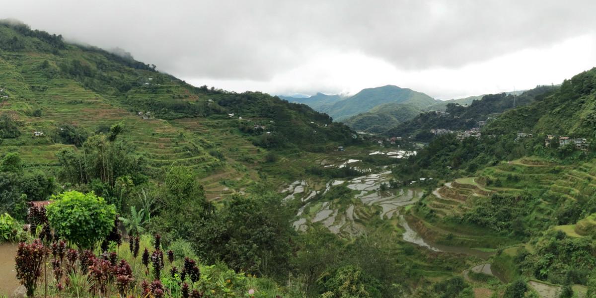 Rijstvelden Filipijnen