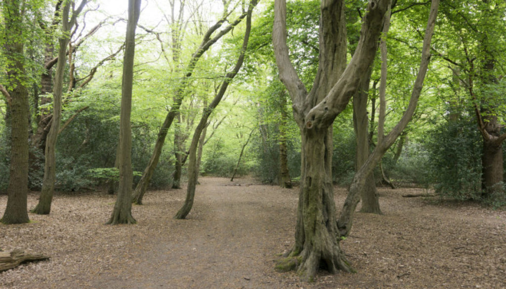 Forest in London